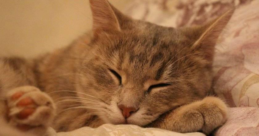 Симптомы липидоза печени у кошек