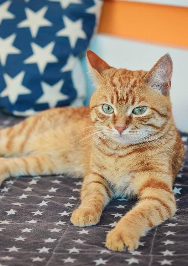 Котенок рыжего цвета: называем прикольно и оригинально интересным именем
