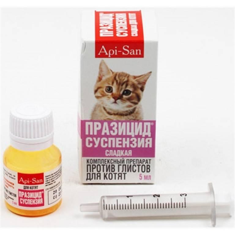 Суспензия празицид плюс для кошек: инструкция по применению и отзывы
