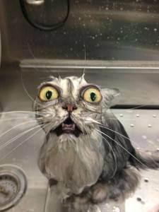 Как искупать кота, если он боится воды
