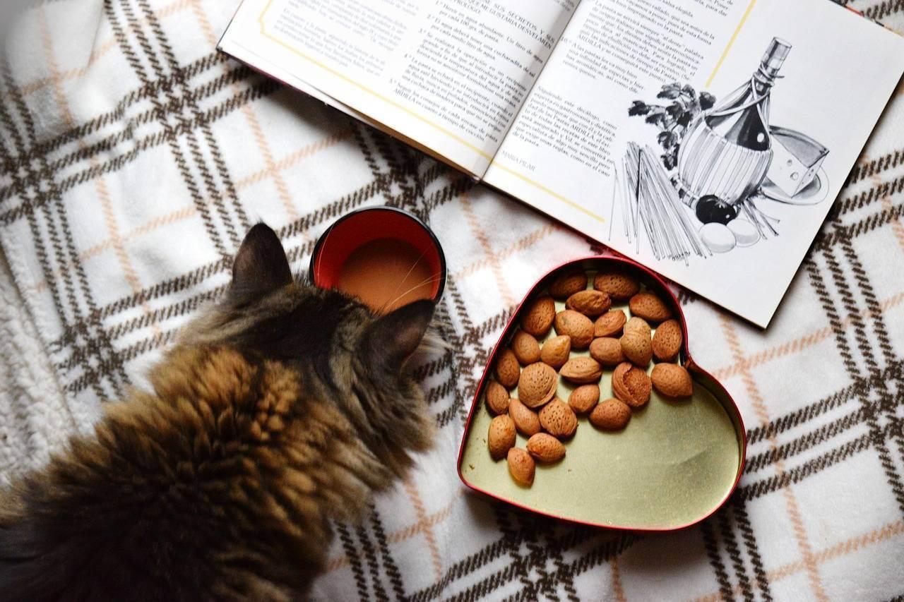 Какие каши можно кошкам? ответы эксперта