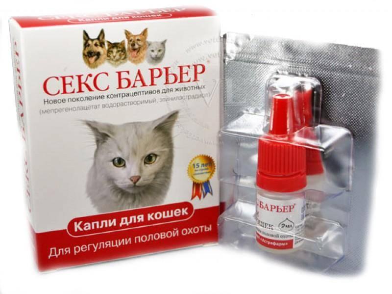 Таблетки для кота вместо кастрации: плюсы, минусы, противопоказания