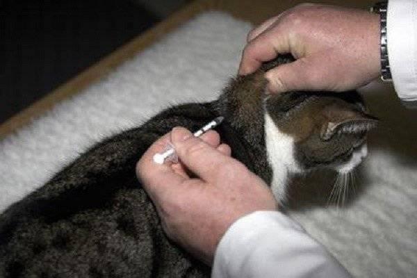 Диабет у котов