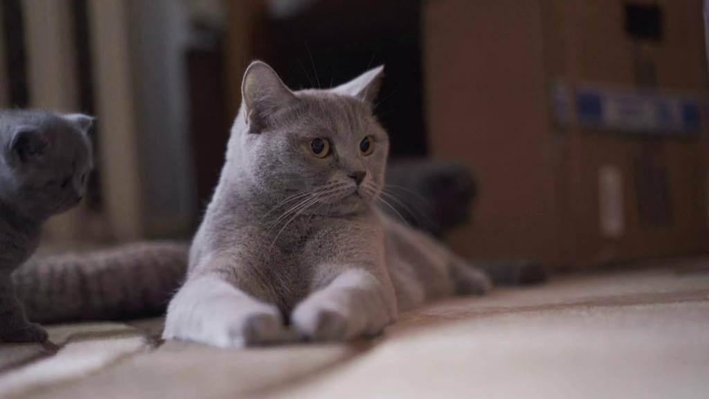 Повадки котов и кошек
