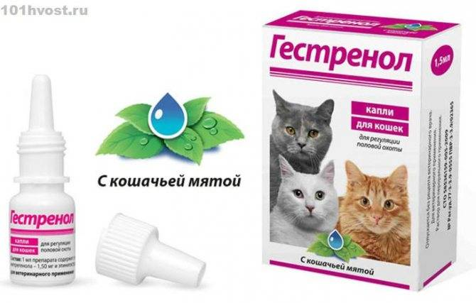 Гестренол для кошек: инструкция по применению, отзывы