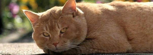 Что делать, если у кошки запор?