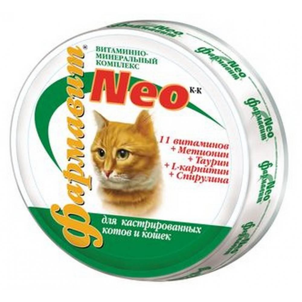 Витамины для кошек: поддерживаем здоровье питомцев правильно