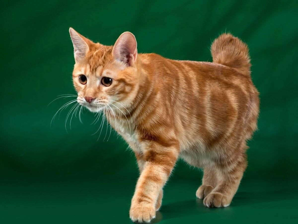 Рыжие коты (фото): солнечные символы счастья, тепла и материального благополучия