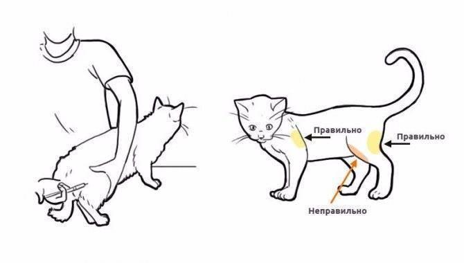 Катозал, о чем вы не знали, аналоги, инструкция, противопоказания. ветеринарный иммуностимулятор катозал: инструкция по применению, дозировка и рекомендации специалистов ветеринарный препарат катозал