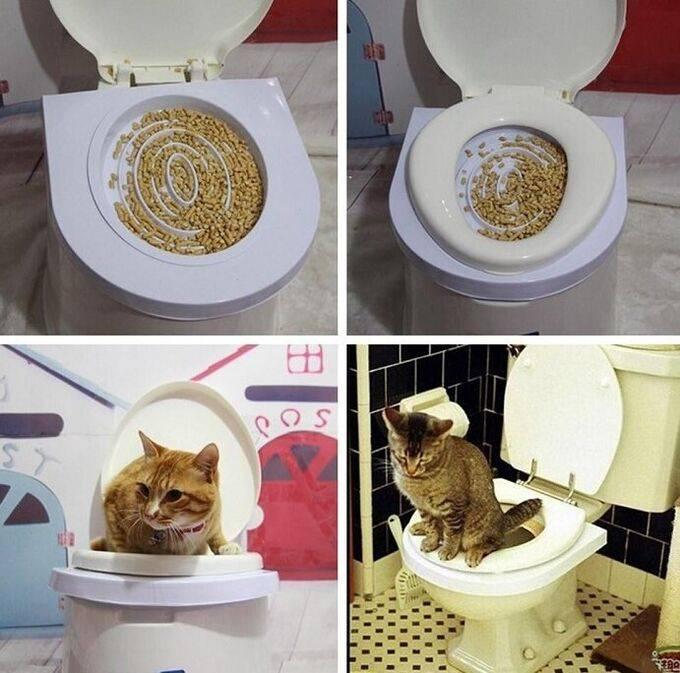 Как научить кота ходить в туалет на унитаз в домашних условиях: система или набор для приучения