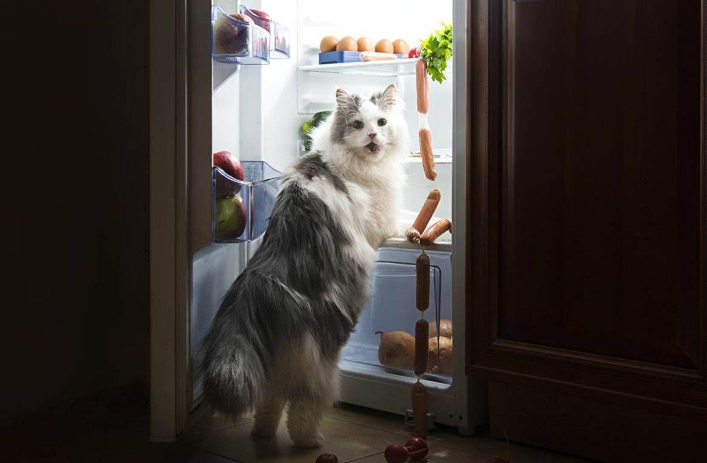 Можно ли давать куриные шеи кошкам: как давать куриные кости. можно ли кошке есть кости и как это правильно делать