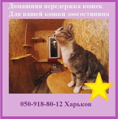 Передержка кошки в москве, объявления от зоонянь и зоогостиниц. отзывы. цены. рейтинг