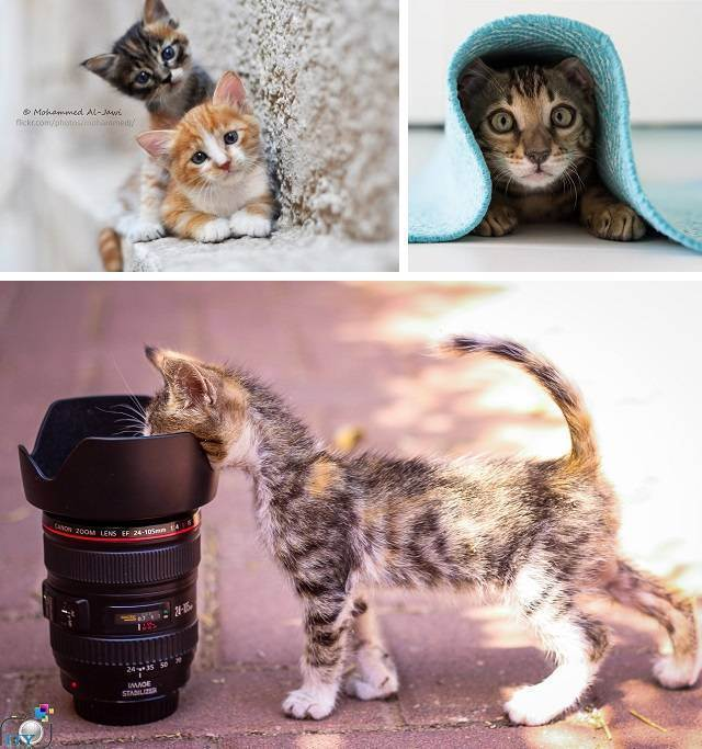 10 игр для котят и кошек - как играть с котенком и кошкой - всё о кошках и котах