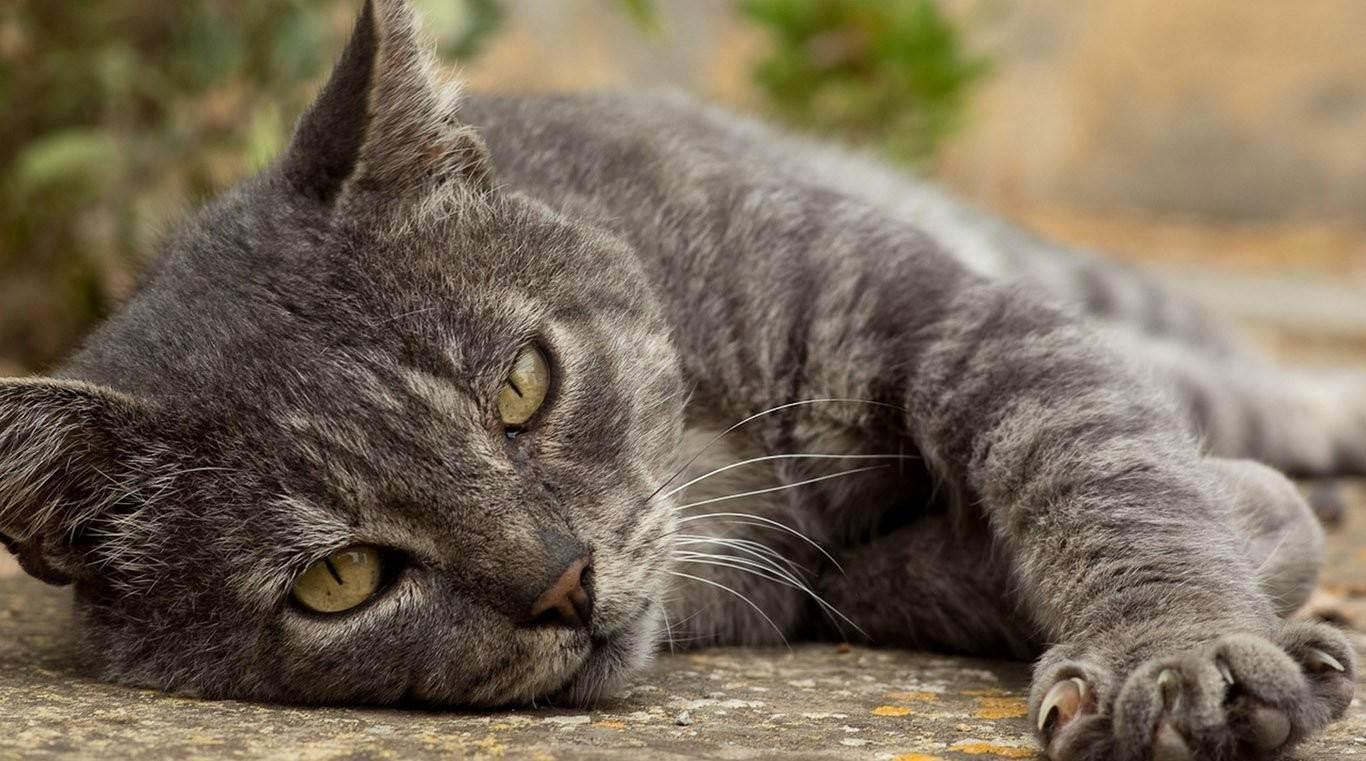 По каким показателям и как определить возраст кошки