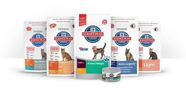 Чем кормить британского котенка? - запись пользователя евгения (kotgora) в сообществе домашние животные в категории помогите советом - babyblog.ru