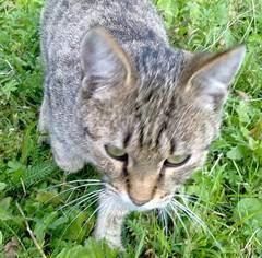 Как определить, что кошка заболела: симптомы и лечение