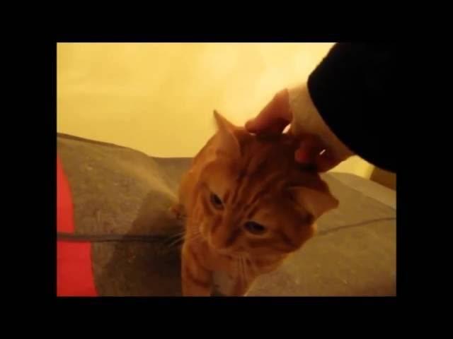 Любят ли кошки своих хозяев? как узнать, любит ли кошка хозяина и умеет ли она это делать. - petstime.ru