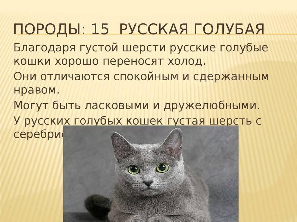 При какой температуре кошки могут жить на улице: какие породы не переносят холода. мерзнут ли кошки зимой? какую минусовую температуру могут выдержать кошки