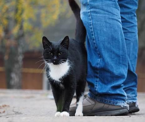 Кошки гении – топ-5 пород кошек с самым высоким интеллектом