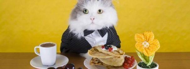 Какой корм лучше для кошек: рейтинг и отзывы ветеринаров