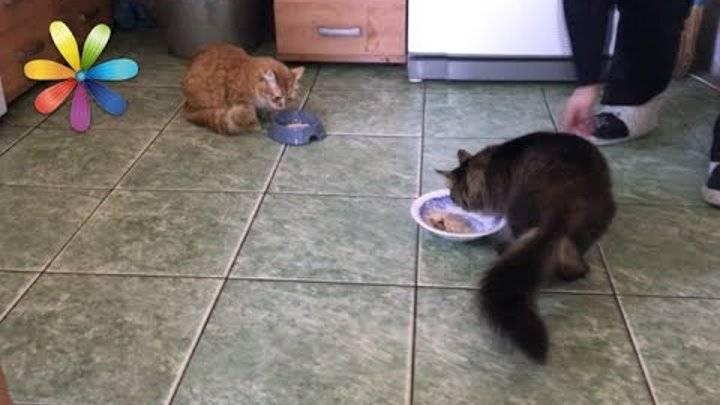 Как подружить в одной квартире кота и кошку: полезные советы