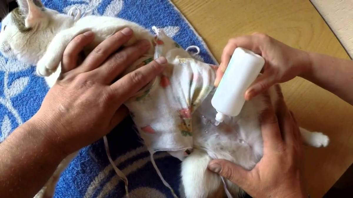 Забота о кошке после стерилизации: подготовка и уход