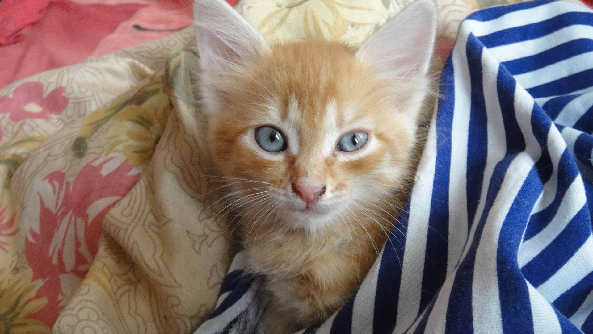 Почему кошка лижет руки хозяину