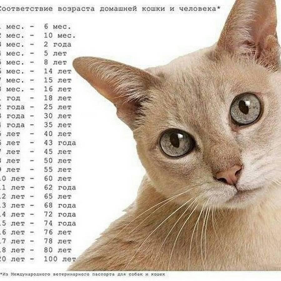 Сколько по человеческим меркам 15-летней кошке