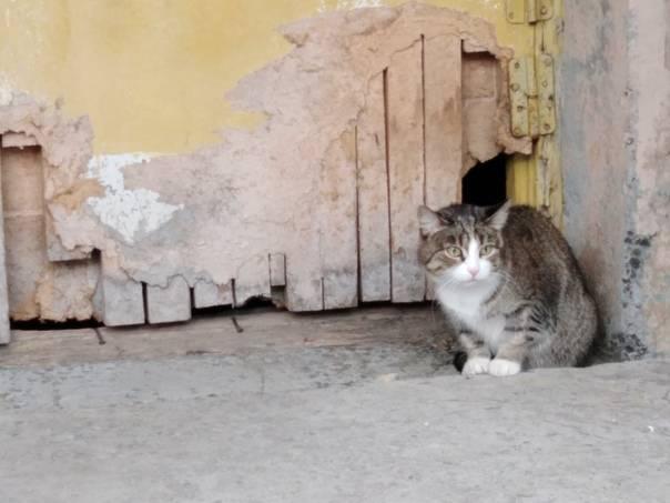 Пропал кот: как вернуть друга