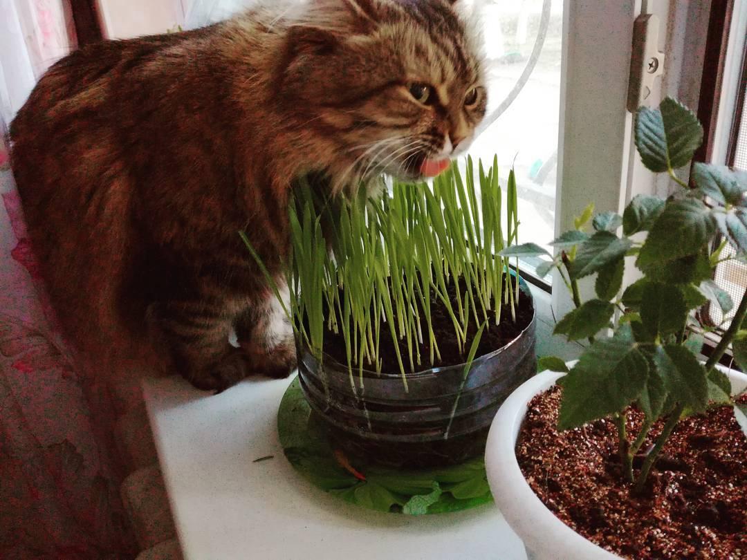 Кот или кошка ест землю — почему и что делать?   zdavnews.ru