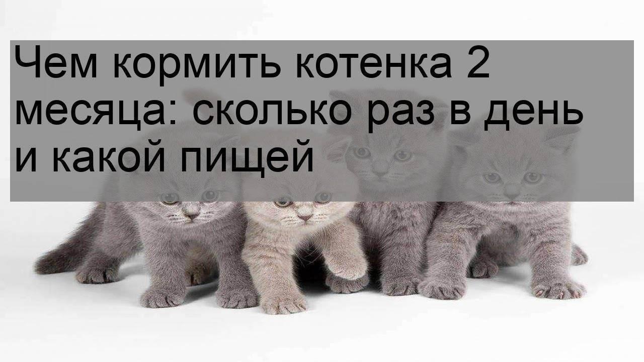 Норма корма для котенка в день: таблица норм для кормления котенка сухим и влажным кормом. сколько граммов корма необходимо для котенка 4 месяцев и других возрастов?