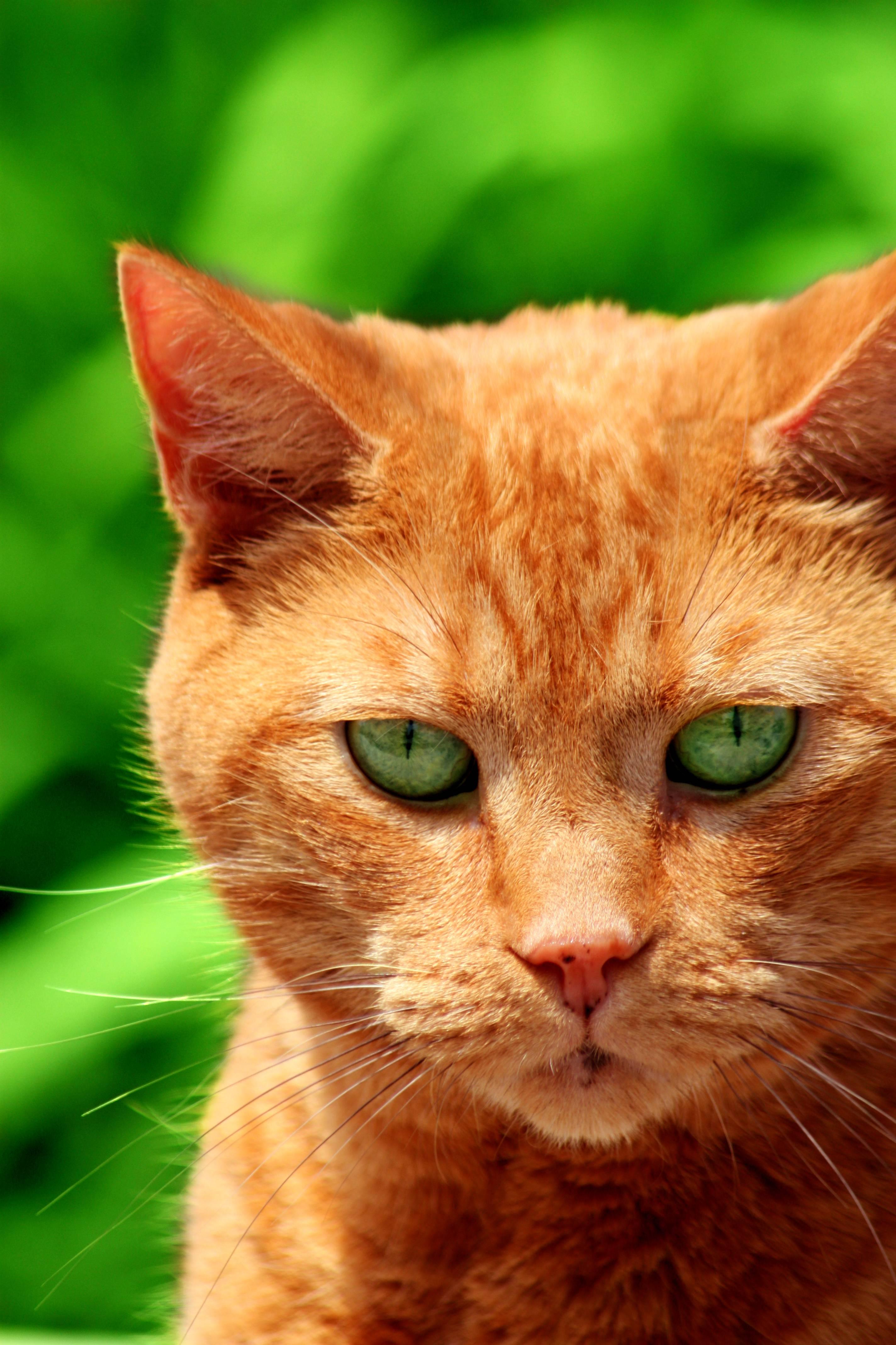 Кот рыжий с зелеными глазами: изучаем вместе