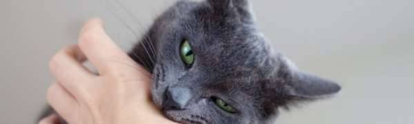 Сонник укусила кошка. к чему снится укусила кошка видеть во сне - сонник дома солнца