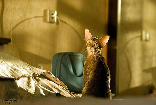 Как путешествовать с животными: подготовка к поездке, основные правила и советы