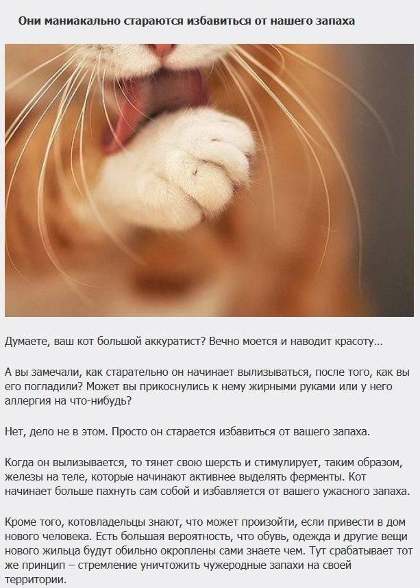 Что обозначают повадки домашних кошек и их значение