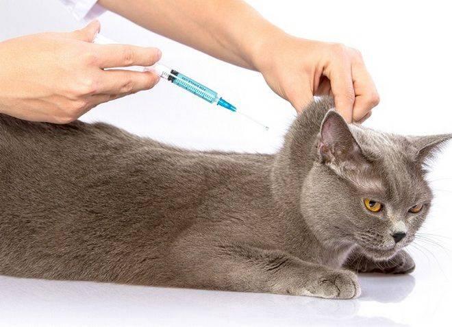 Хромота у кошек после прививки