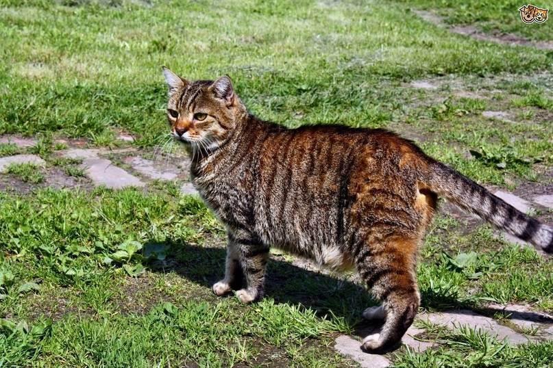 Почему у кота висит кожа на животе и нормально ли это?