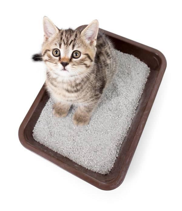 Котенок не хочет ходить в лоток