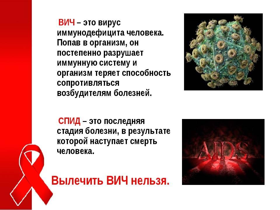 Иммунодефицит у кошек в общем анализе крови