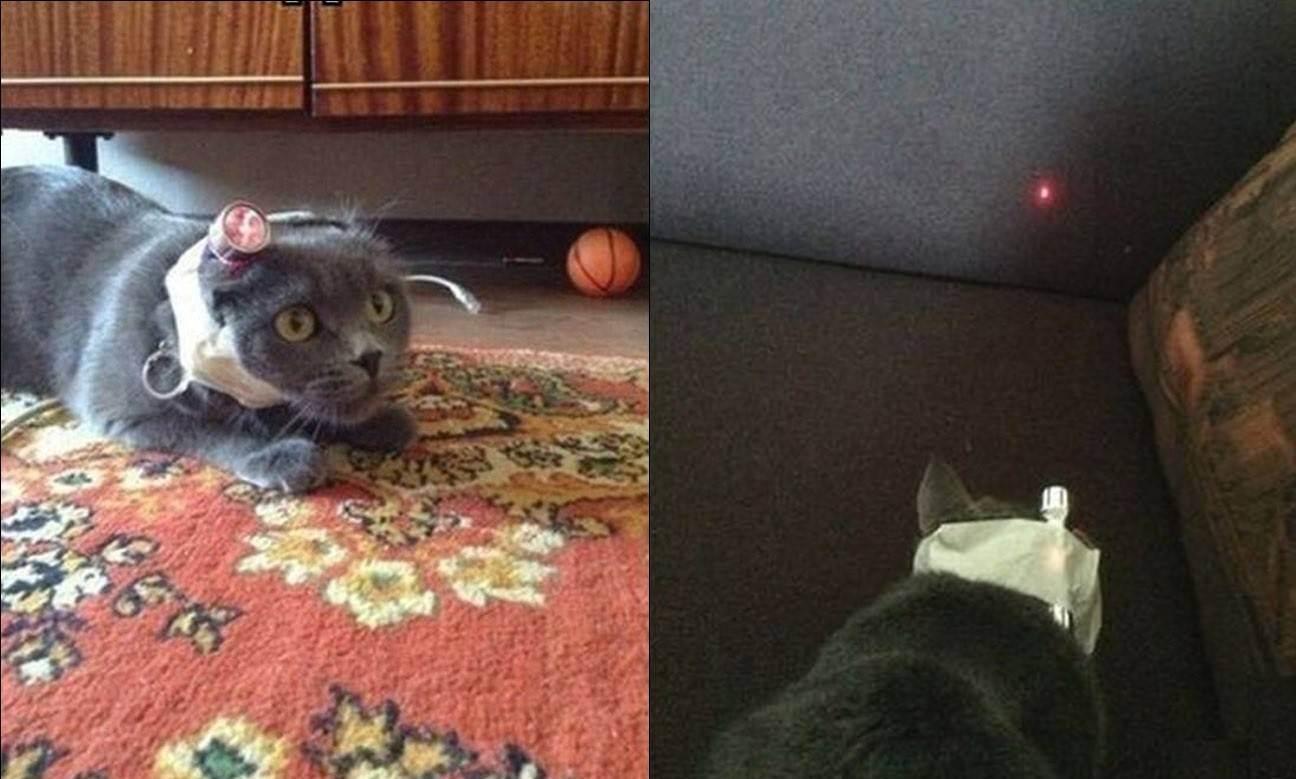 Где оставить кошек на время отпуска? - запись пользователя никт (helga_84) в сообществе домашние животные в категории помогите советом - babyblog.ru
