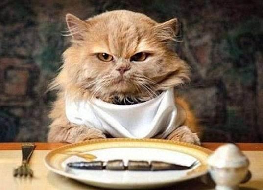 Как правильно перевести кошку с натурального корма на сухой, можно ли смешивать