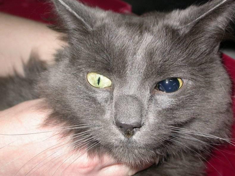 У кота разные по размеру зрачки – у кошки один зрачок больше другого