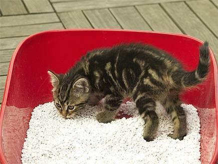 Кошка не какает больше недели. что делать?