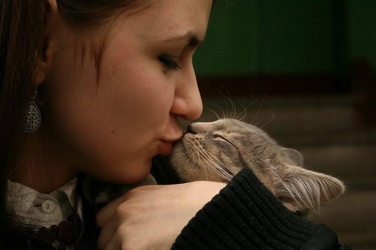 Можно ли целовать домашнюю кошку и стоит ли так проявлять свою любовь к питомцу