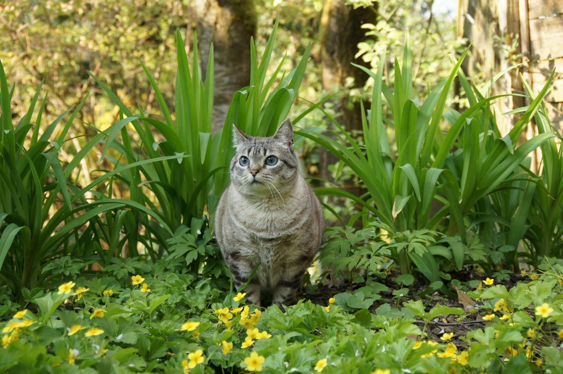 Сонник быть кошкой. к чему снится быть кошкой видеть во сне - сонник дома солнца