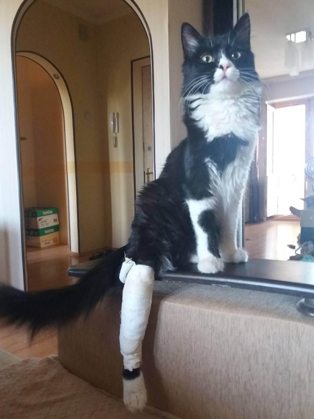 Проблемы с опорно-двигательным аппаратом у котёнка