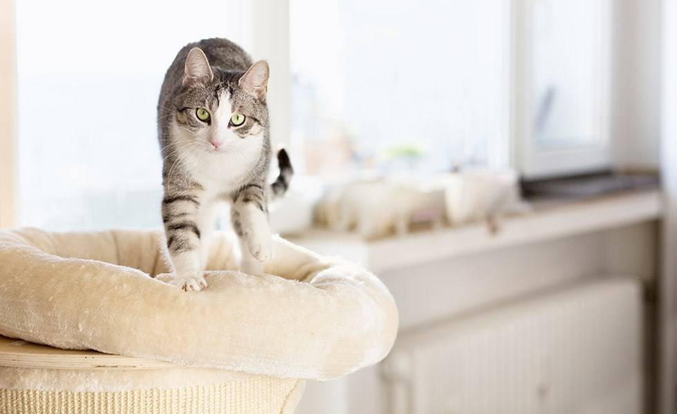 Кошка делает массаж лапками что это значит?