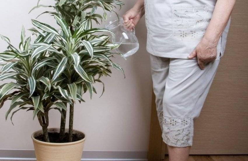 Комнатные растения, безопасные для кошек