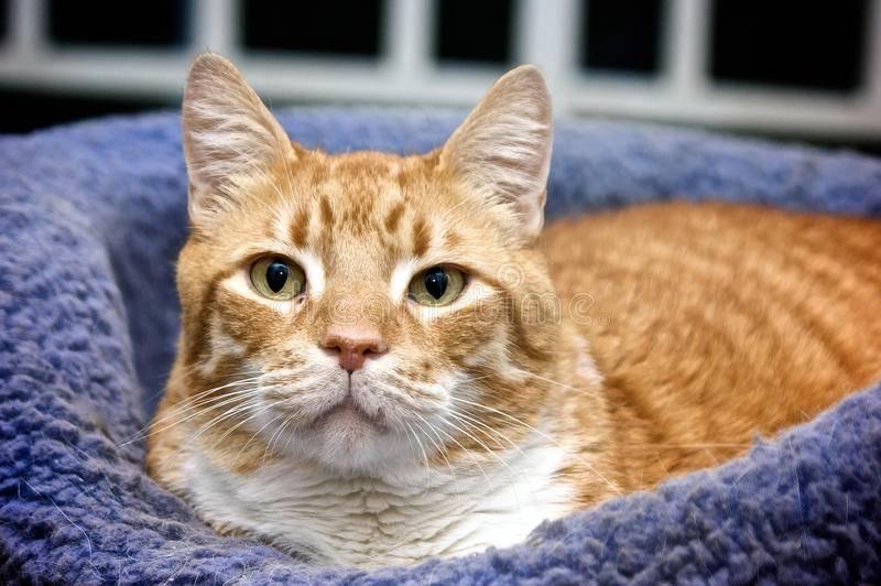 Из-за чего у кошки может дергаться голова? | мир кошек у кошки дергается голова — повод ли это, чтобы обратиться к специалисту? | мир кошек