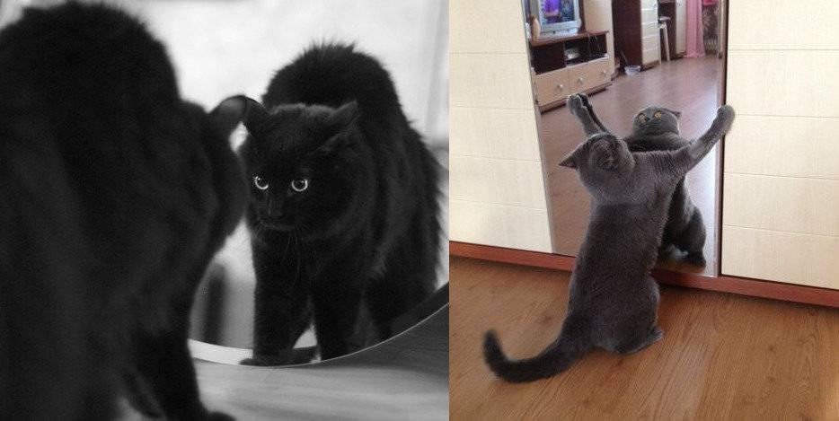 Кошка пытается залезть в зеркало. почему кошки не смотрят в зеркало? суеверия, связанные с кошками и зеркалами